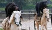 瞧你们两个熊样也会跑马啊