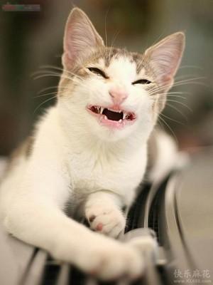 猫咪也有开怀大笑的时候