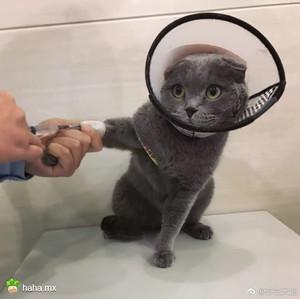被这样无辜的眼神看着,都不敢把喵喵弄疼了