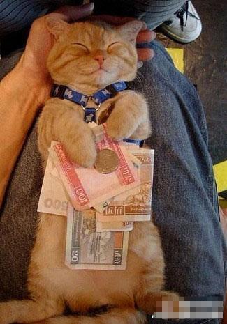 想拿走我的钱?做梦~