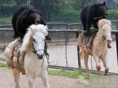 瞧你们两个熊样也会赛马啊