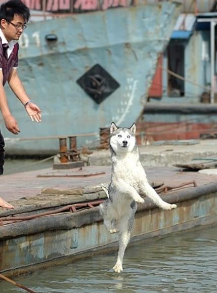 狗狗的水上芭蕾