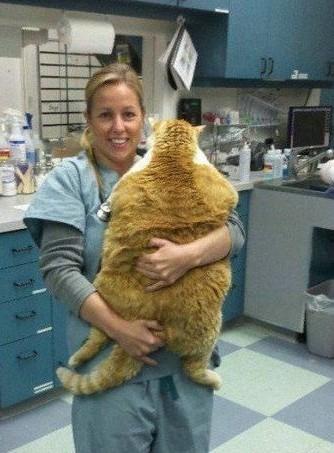 胖的没脸见人的猫咪