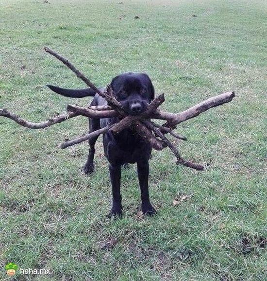 也不知道你扔的是哪根,索性都捡回了
